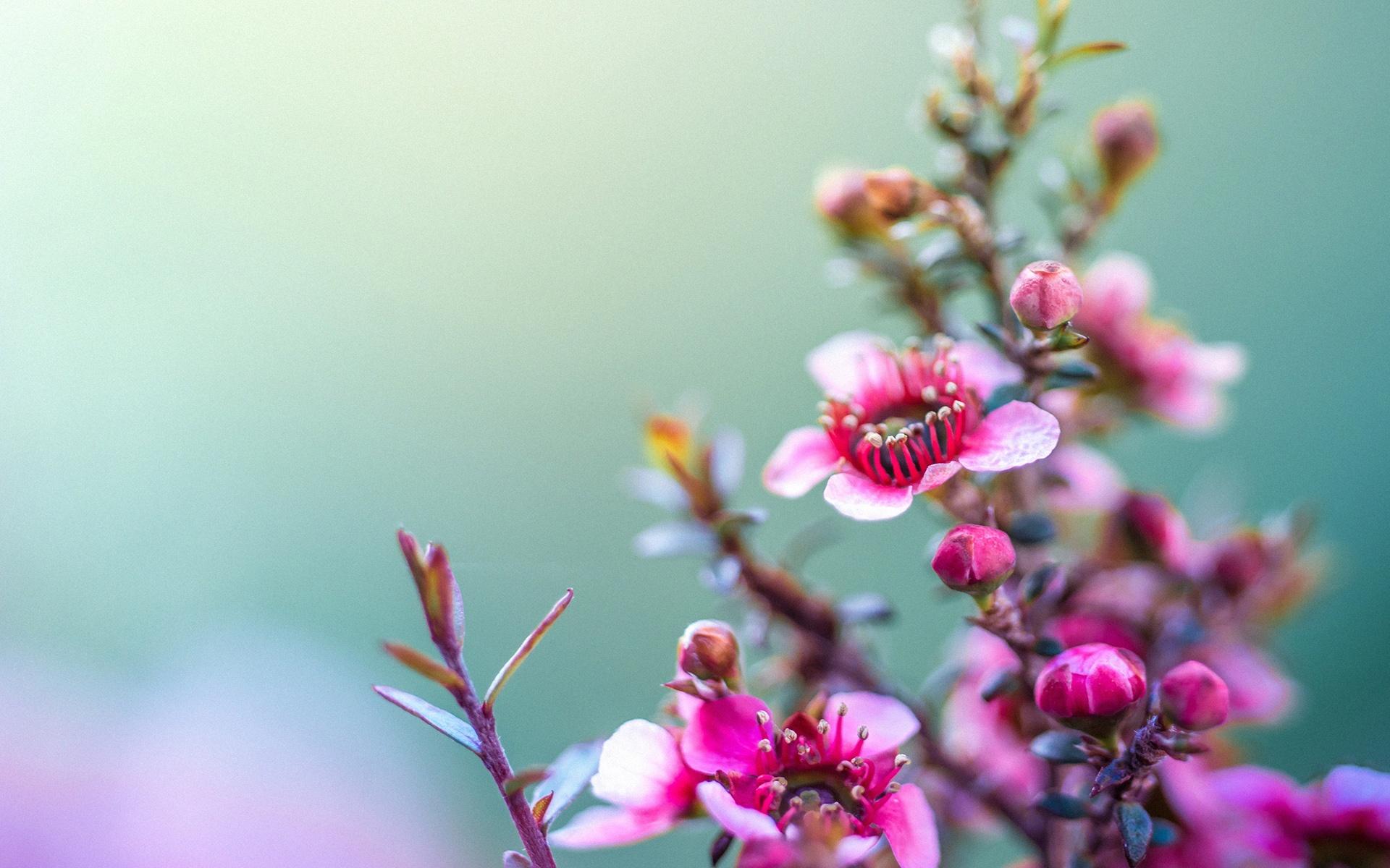 Flores Bonitas Para Jardin Perfect Es Una Propuesta A Todos Para - Flores-bonitas-para-jardin