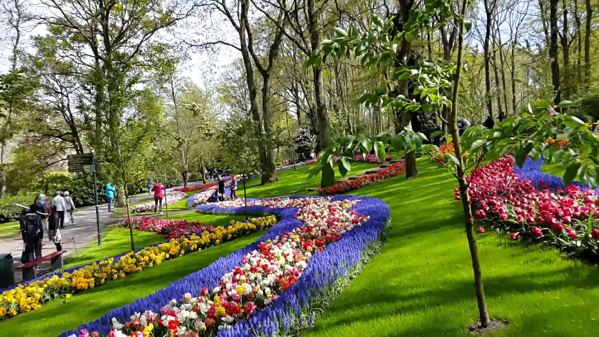 Imagenes De Jardines Con Flores: Imagenes De Los Jardines De Keukenhof