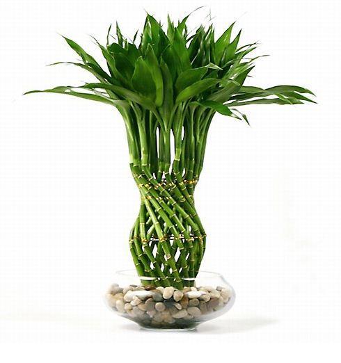 Imagenes de jardines imagenes de plantas de interior que - Plantas de interior que necesitan poca luz ...