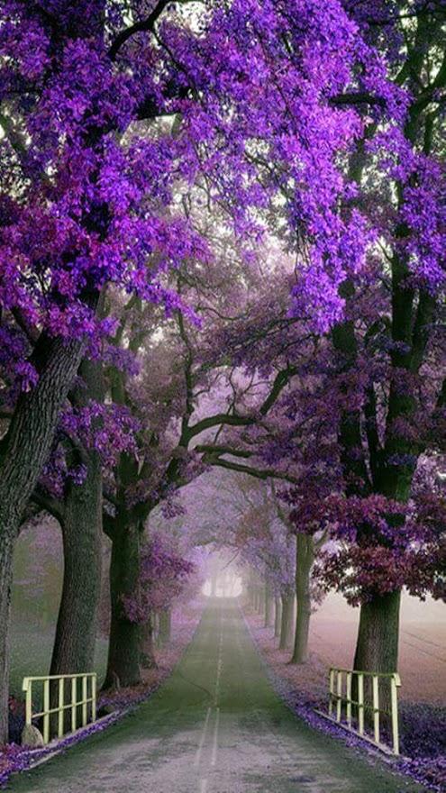 Imagenes de jardines con flores para pantalla de celular for Imagenes d fondo de pantalla para celular
